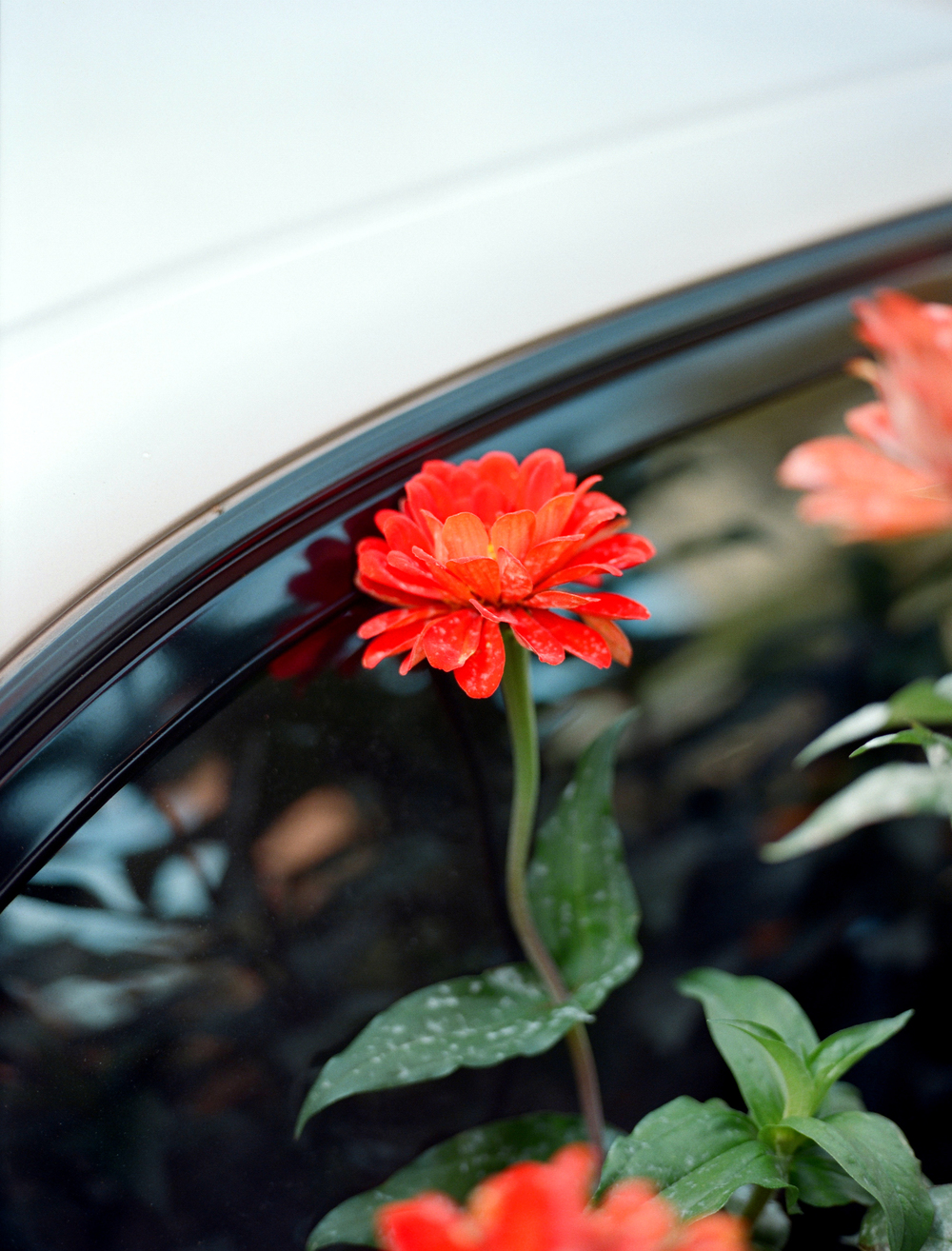 plantsandcars2.jpg