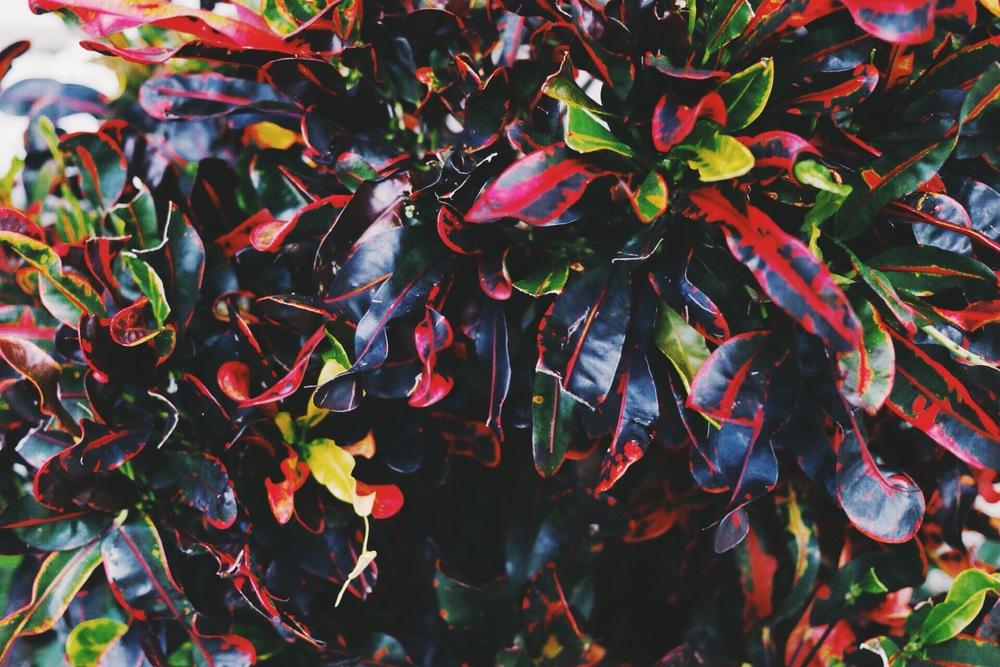 fruitplant.jpg