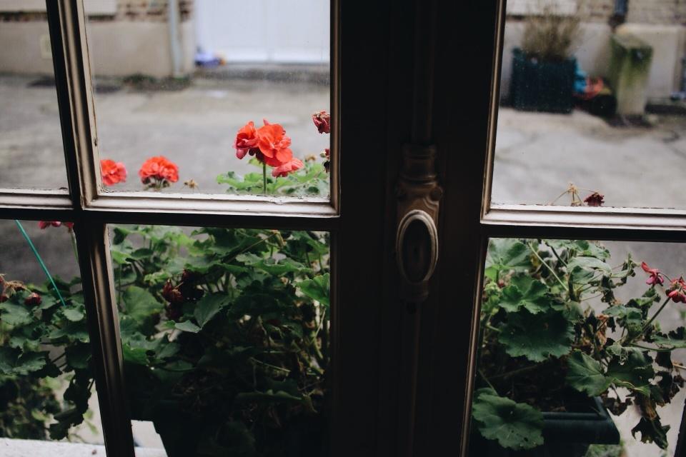 les fenetres, les fleurs.jpg
