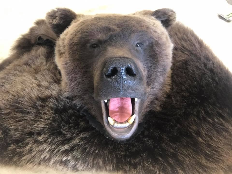 grizz open mouth rug.jpg