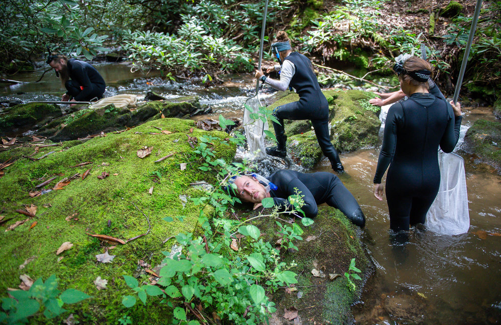 Ecologists and biologists with the Georgia Department of Natural Resources, Georgia Department of Transportation, and the Chattahoochee Forest National Fish Hatchery participate in a scheduled survey of the Eastern hellbender in the Chattahoochee National Forest in North Georgia Friday, Aug. 31, 2018. Here, they are checking a creek for likely habitats in hopes of locating a hellbender.