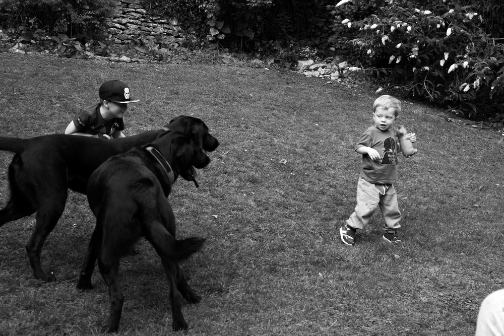 My boys playing rugby with the 'Big black doggies!' What a great way of exercising children and animals, they played it for hours! Coles and Wellie are the most beautiful and well behaved creatures and would play with the boys all day! Fuji X-E1 and 50mm f/1.8