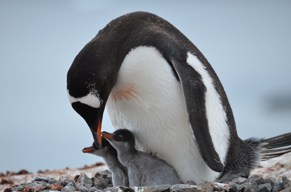 Antarctica Chris (692).JPG