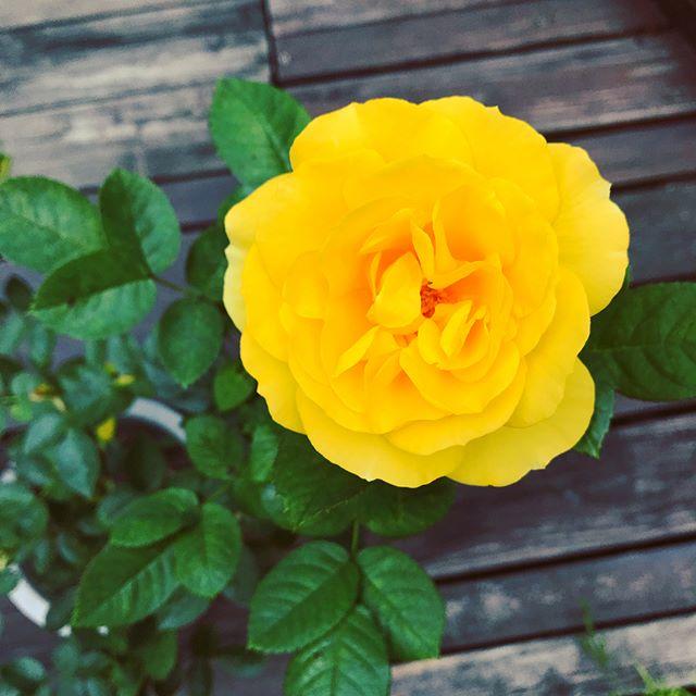 🕑 春假營業時間公告 🕔 4/5(四)~4/7(六)  下午1點~晚上6點  Forro Cafe 春天的花園🌸🌼💐🍀 春天很美,散步很舒服的氣溫。 Forro Cafe的花園同時開了近20種花花,綻放著這一季的姿態,過了春天就看不到了吧⋯⋯ 歡迎春假連休來找我們喝咖啡,到我們精心照顧的花園裡走走。  準備了蛋糕鬆餅與咖啡奶茶等等等你們來嚕🍰🥞☕️