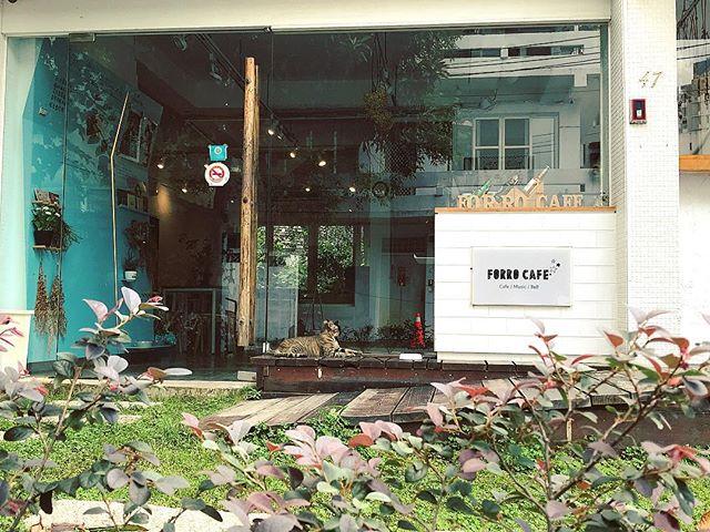 被貓咪守護的花草植物咖啡店🏡  #ForroCafe  #貓咪 #浪浪 #花草系 #台中咖啡店