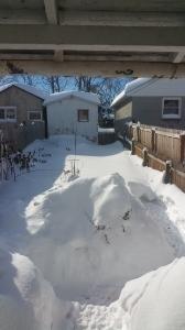 My backyard at 10:54AM on Sunday, January 24, 2016