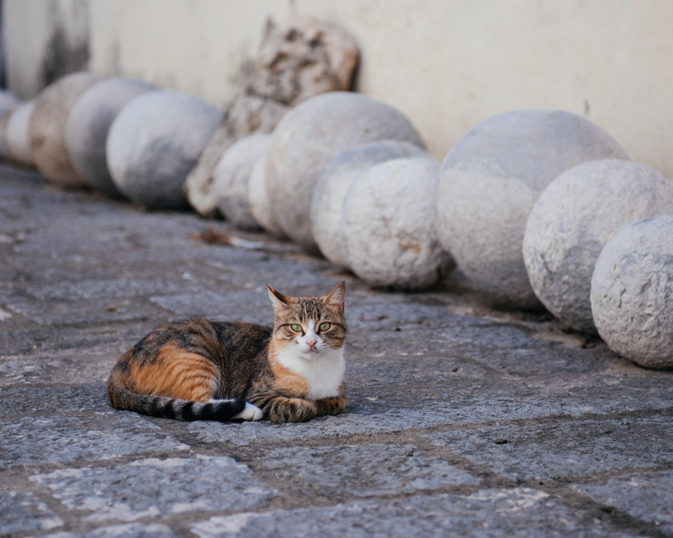 Stray cats littered the streets.
