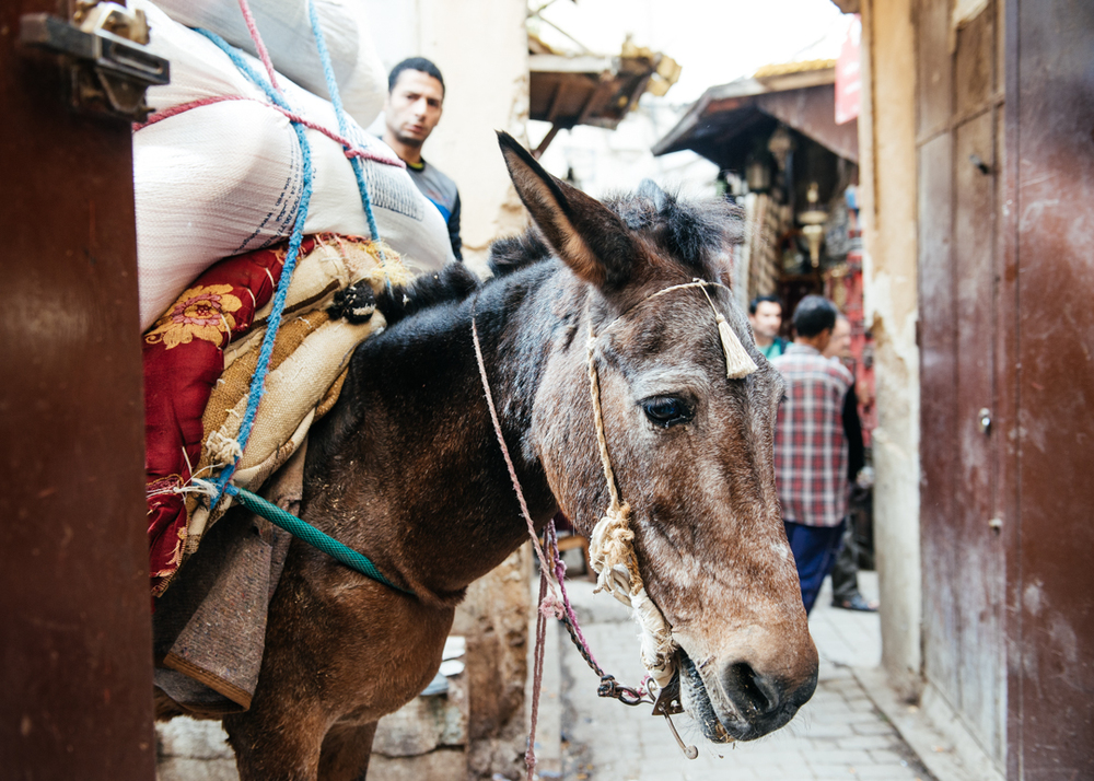 No vehicles are allowed in the medina, so vendors use donkeys to transport merchandise to shops.