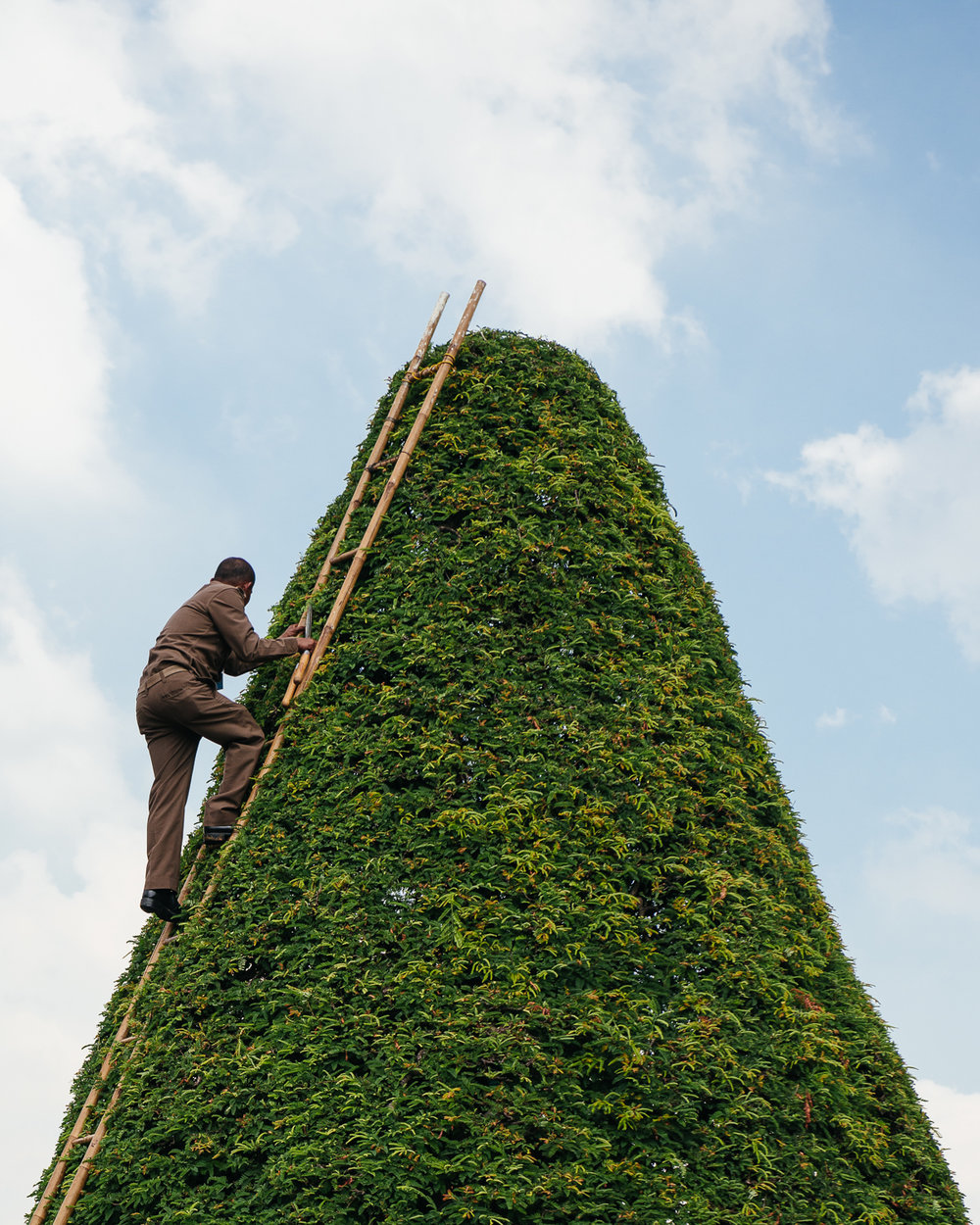 Trimming the hedges.