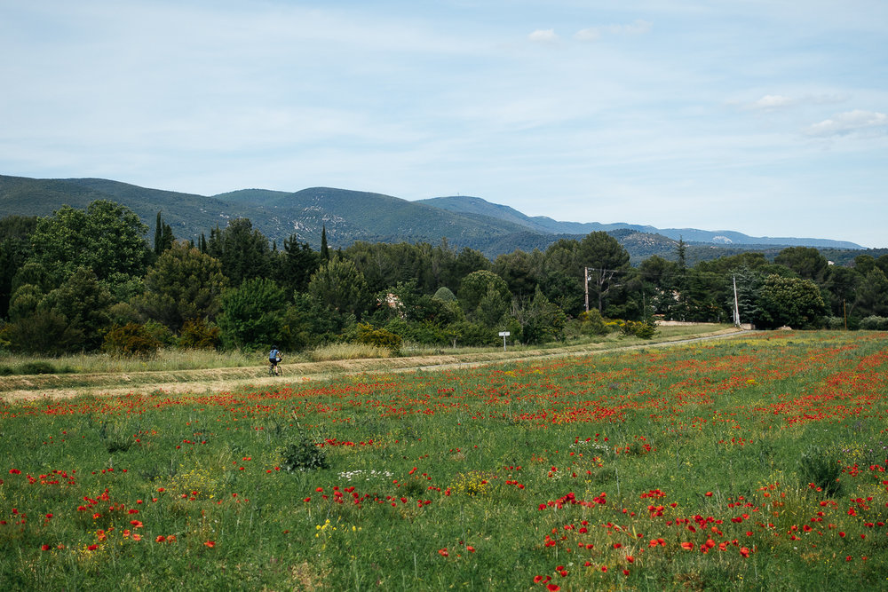 Chelsea on her way to Louris through the poppy fields.
