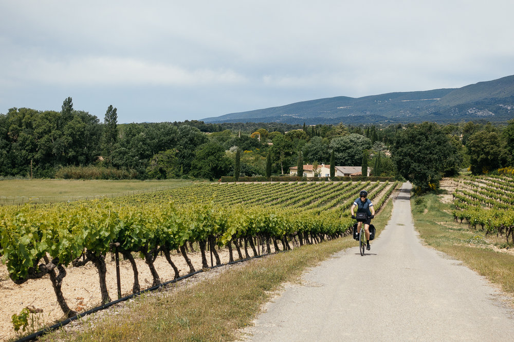 Vineyards cover the Luberon Valley as we bike towards Vitrolles-en Luberon.
