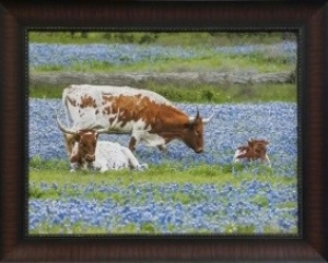 TEXAS BLUEBONNETS $229