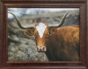 longhorn canvas $229