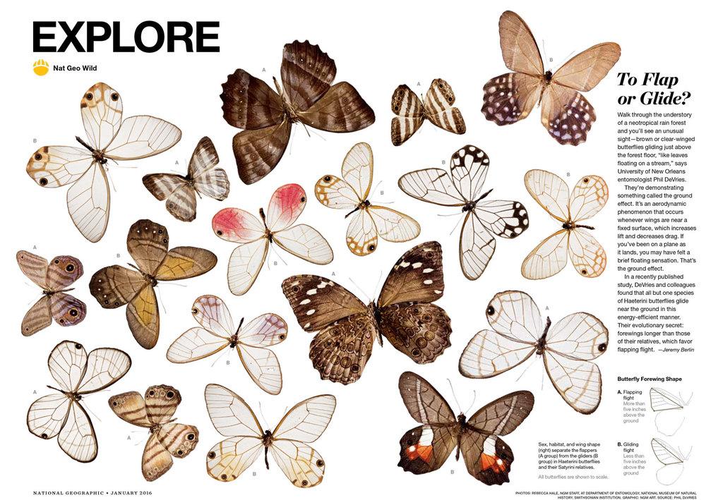 EX-butterflies_001.jpg