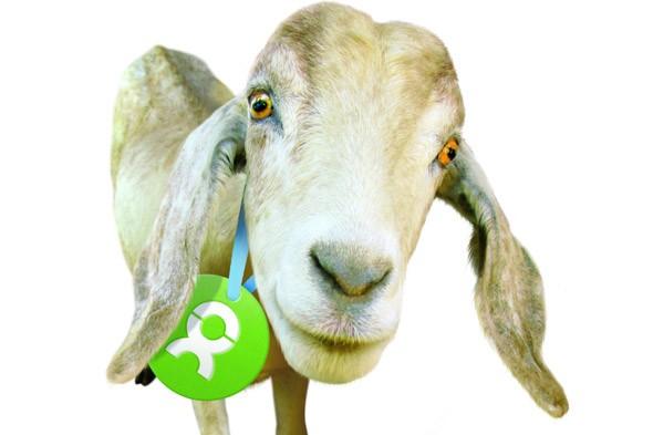 oxfam goat
