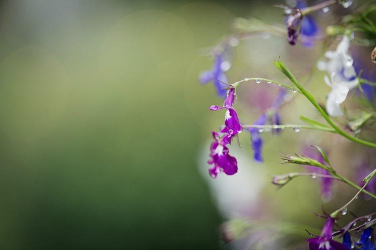 Flowers-in-rain.jpg
