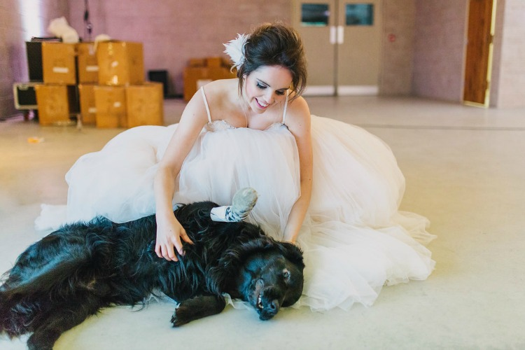 bride-with-cute-dog.jpg