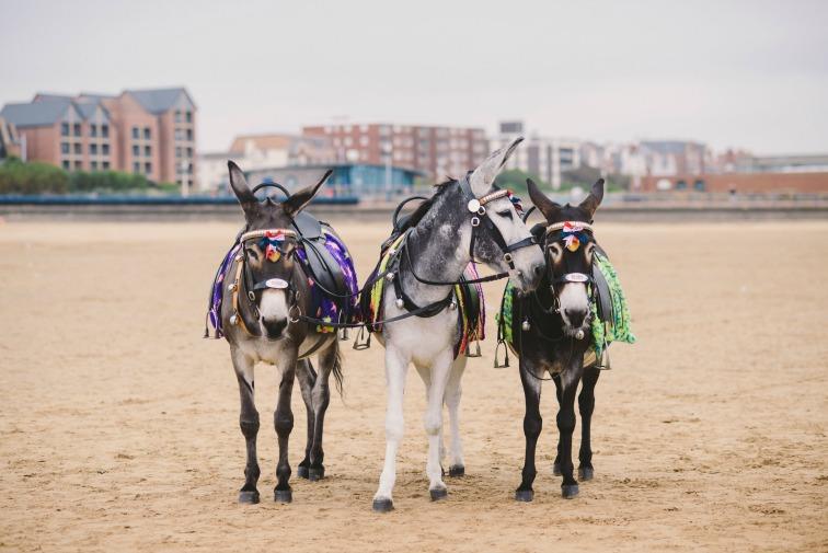 wedding donkeys.jpg