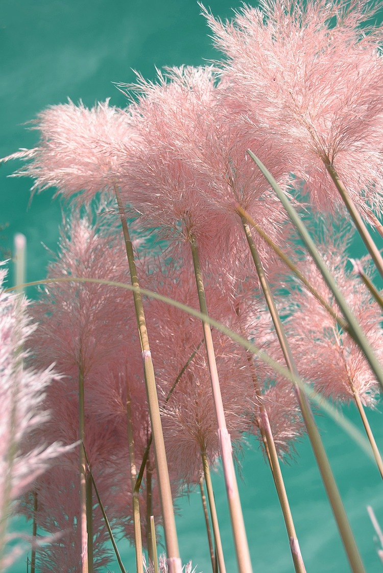 And so to Wed - The Pampas Grass Wedding Trend9.jpg