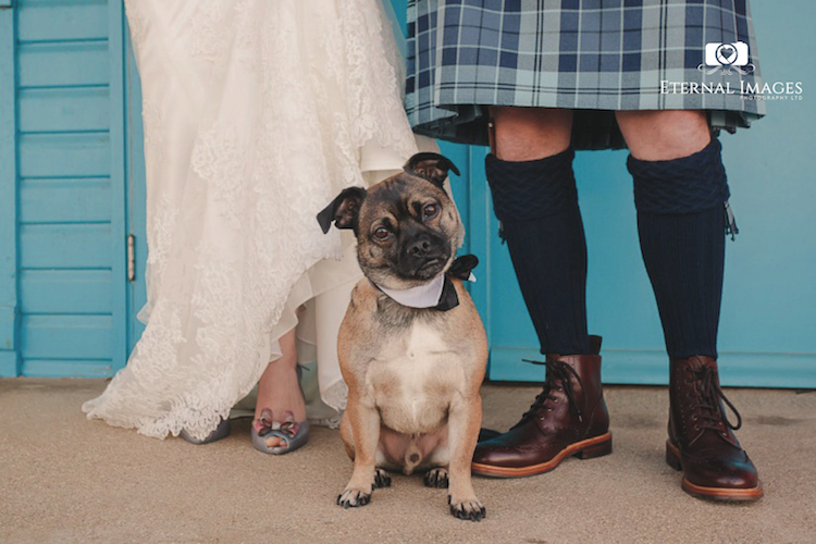 ETERNAL IMAGES PHOTOGRAPHY LIMITED YORKSHIRE WEDDING PHOTOGRAPHY DOGS AT WEDDINGS.jpg
