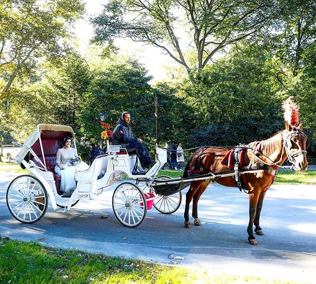 Clare arriving to her ceremony in style! #centralpark #centralparkwedding #horsecarriage #bowbridge #weddingphotographer #wedding #weddingplannernyc #elopementplanner #elopement #newyorkelopement #newyork #weddinginspo #newyorkdreamweddings #harleyhall #elopenyc #weddingphotography #newyork #love #elope #creative #weddings #nywedding #harleyhallphotography #tourist #love #instawedding