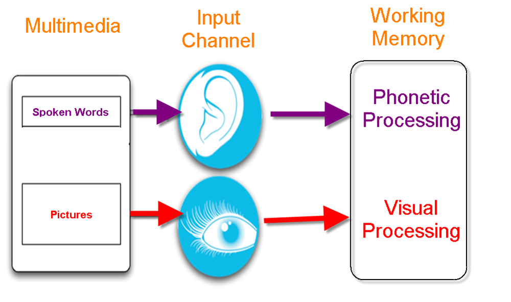 A multichannel model of multimedia cognitive processing. Adapted from Clark and Mayer, 2011.