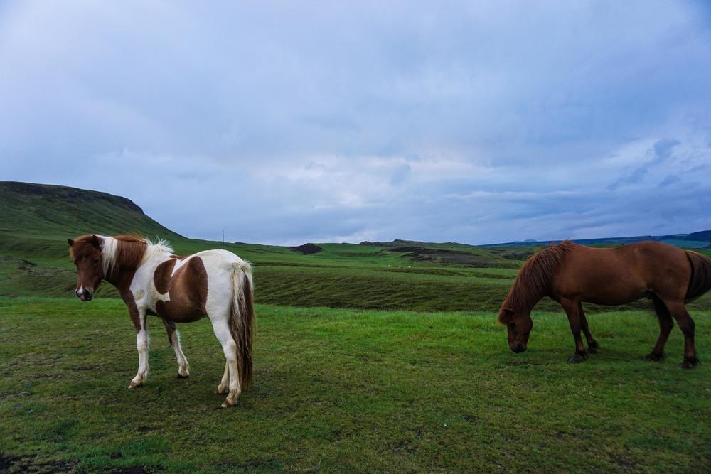 Wild ponies!