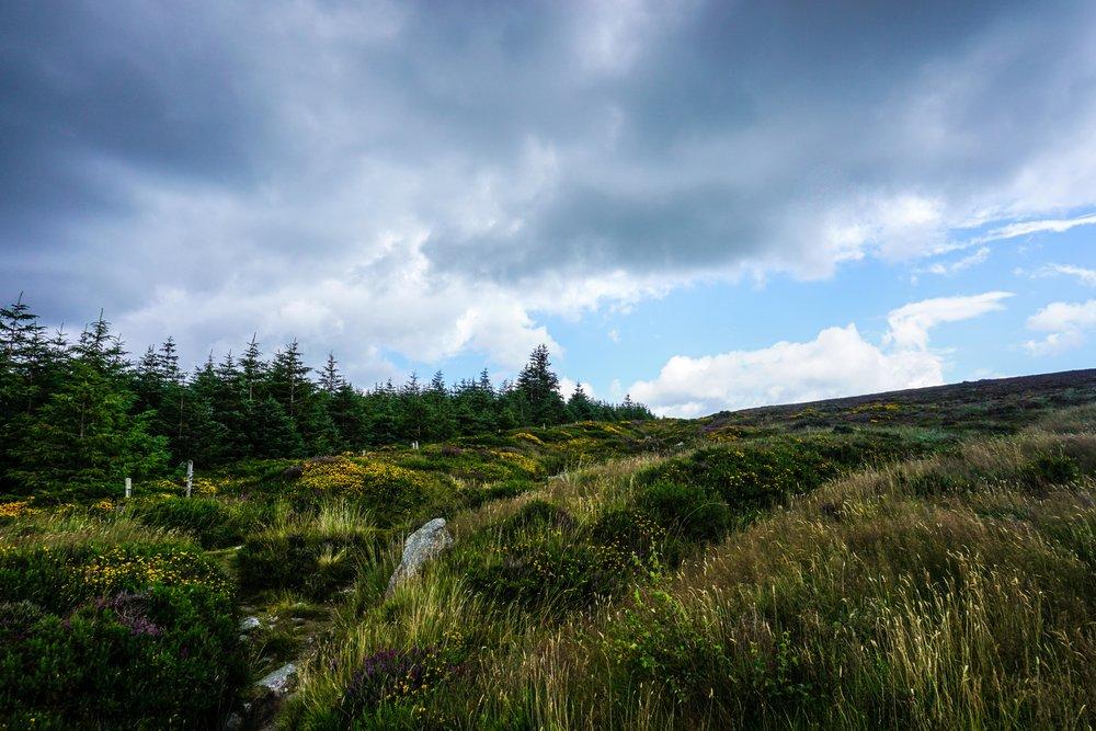 Ireland_Edit-01315.jpg
