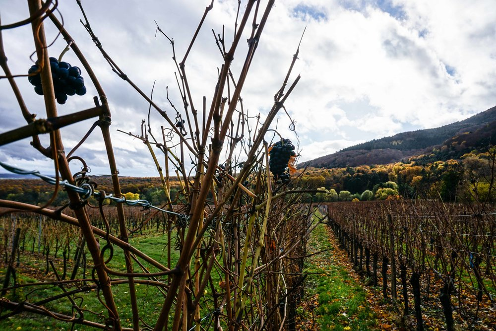 Alsace-02564.jpg