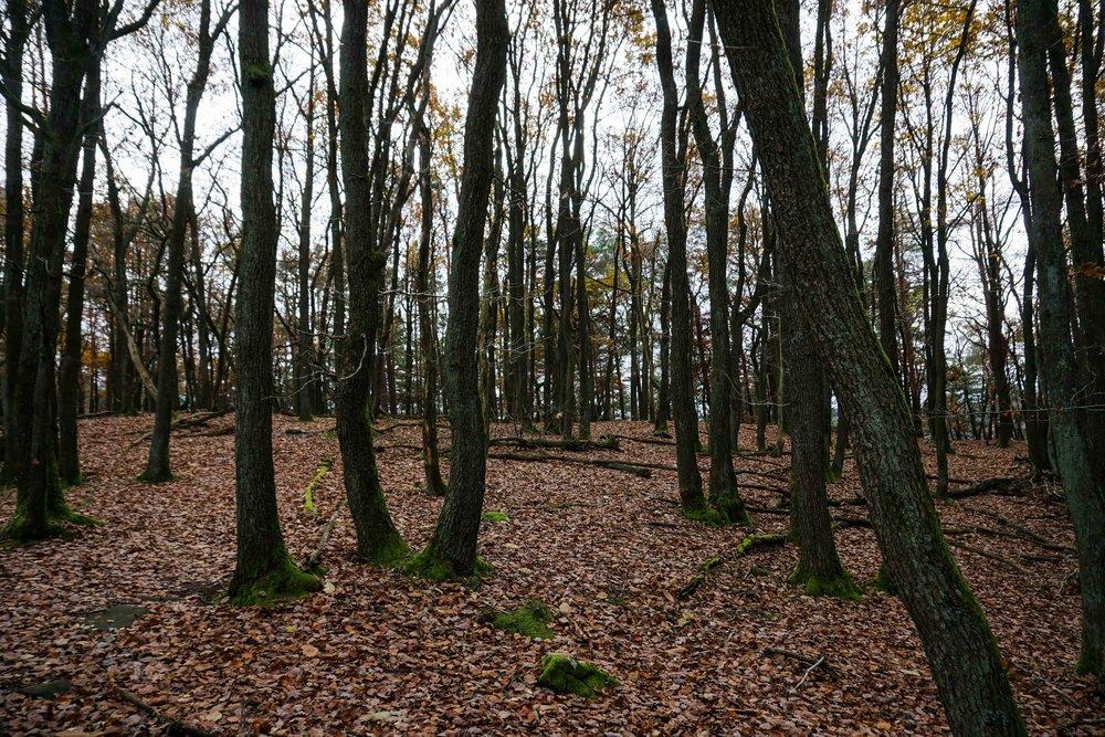 Alsace-02678.jpg