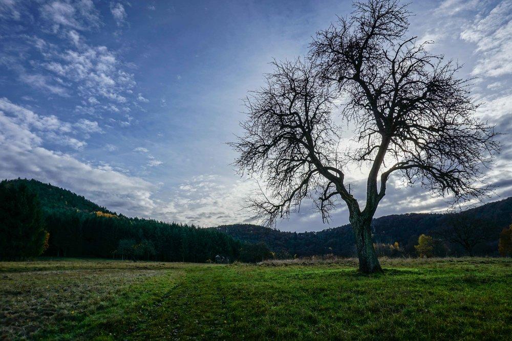 Alsace-02725.jpg
