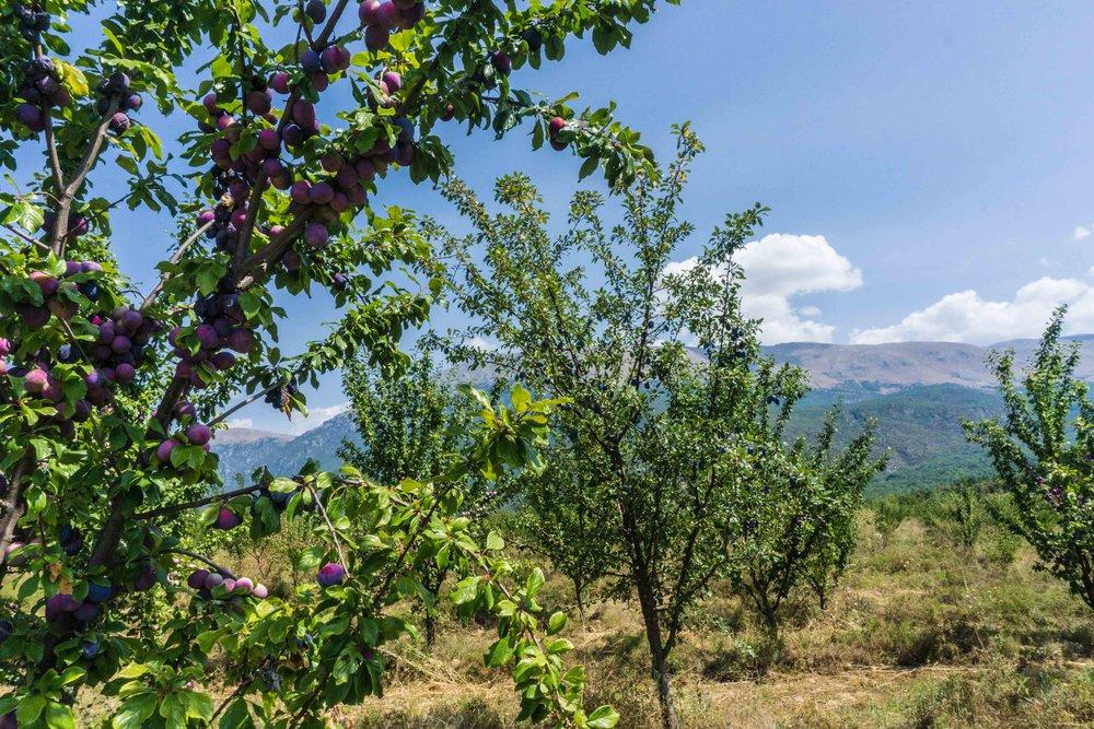 Macedonia-03869.jpg