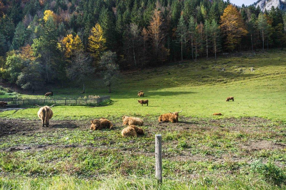 Slovenia-04471.jpg