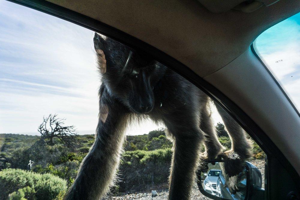 South-Africa-06632.jpg