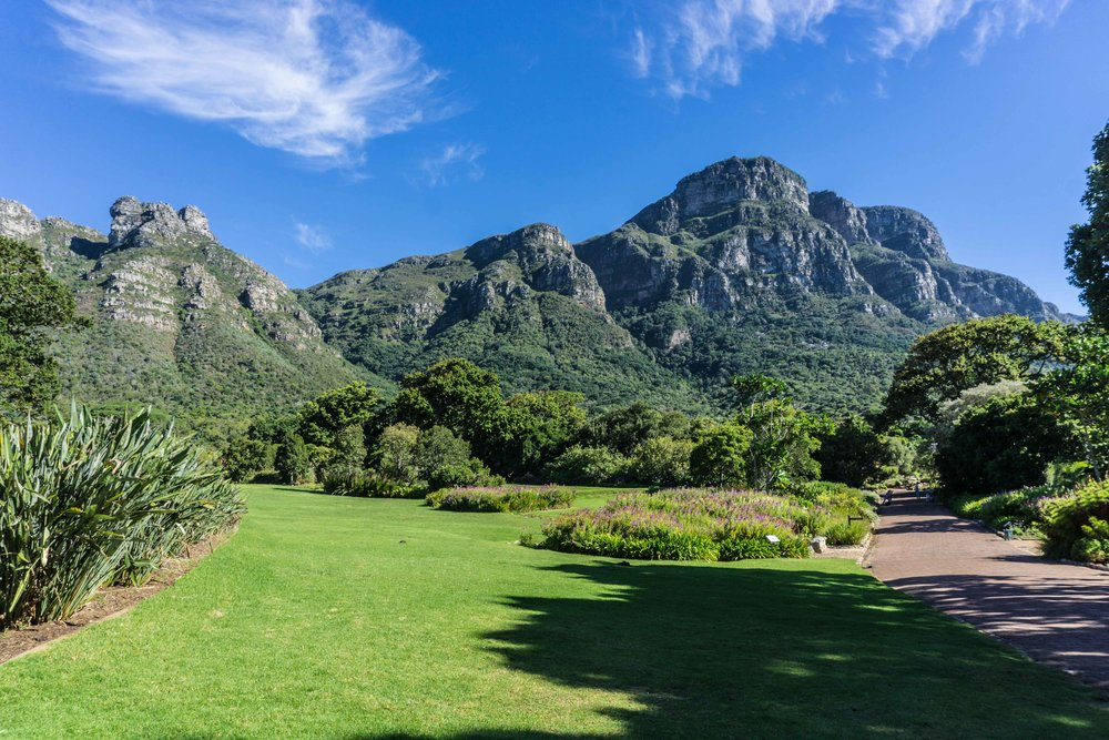 Kirstenbosch Botanical Gardens - we're about to climb that