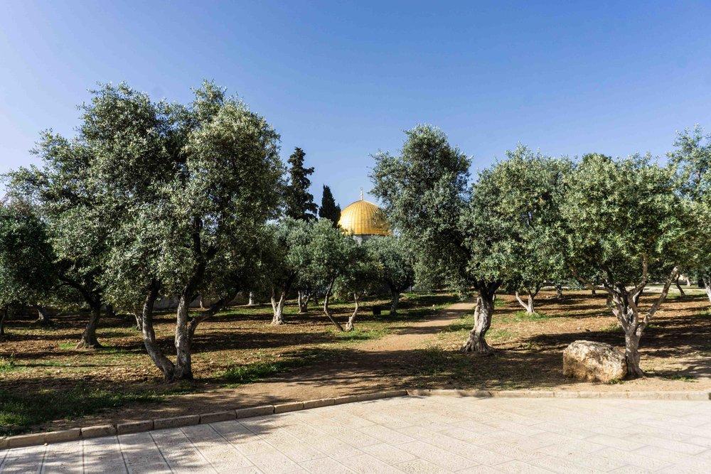 Israel-08125.jpg