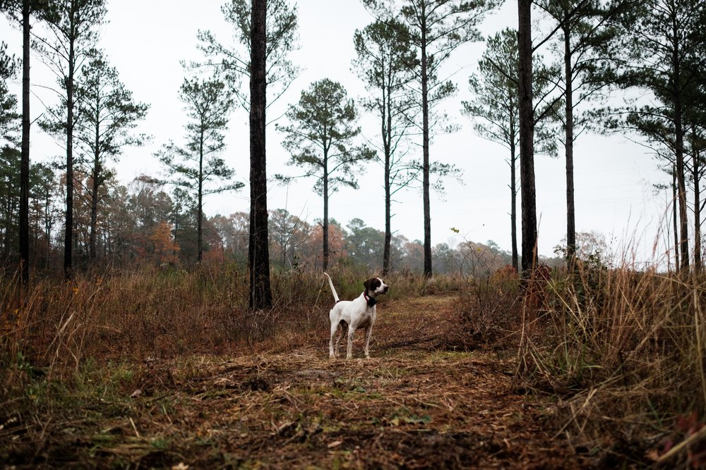 tyler wright photo mississippi outdoor lifestyle photographer