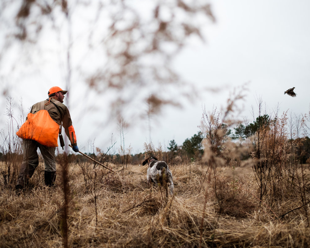 quail hunt favorite.jpg