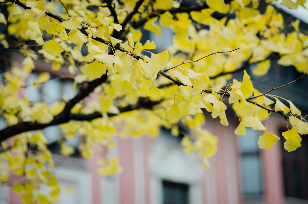 fabiandesalvo_fb_autumn-4490.jpg