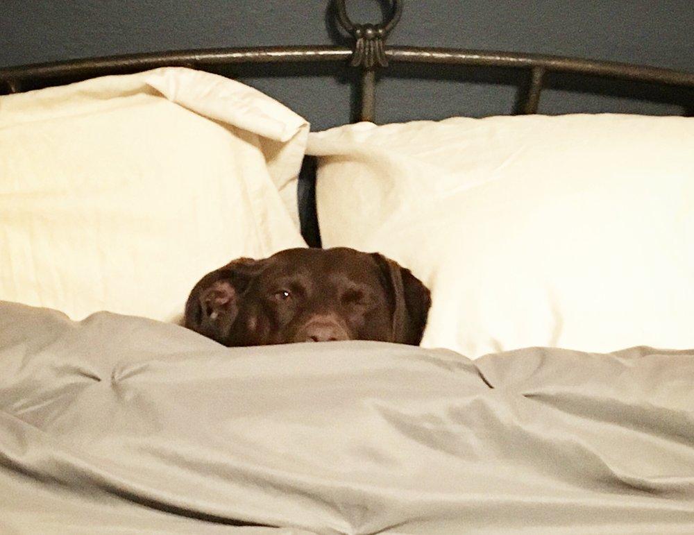 Cooper-in-bed.jpg