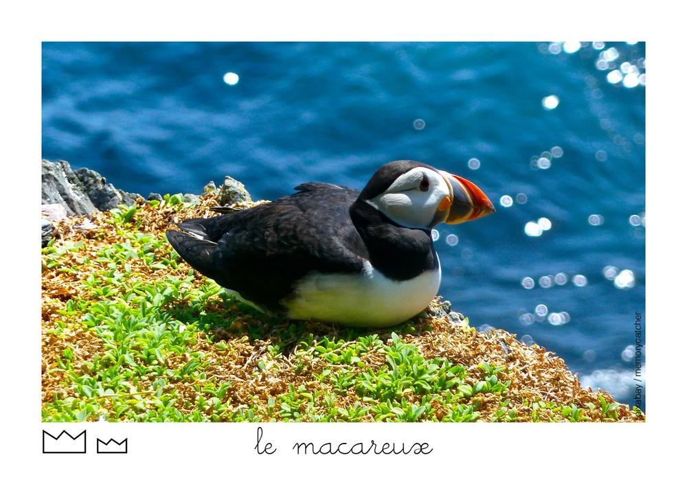 Macareux57.jpg