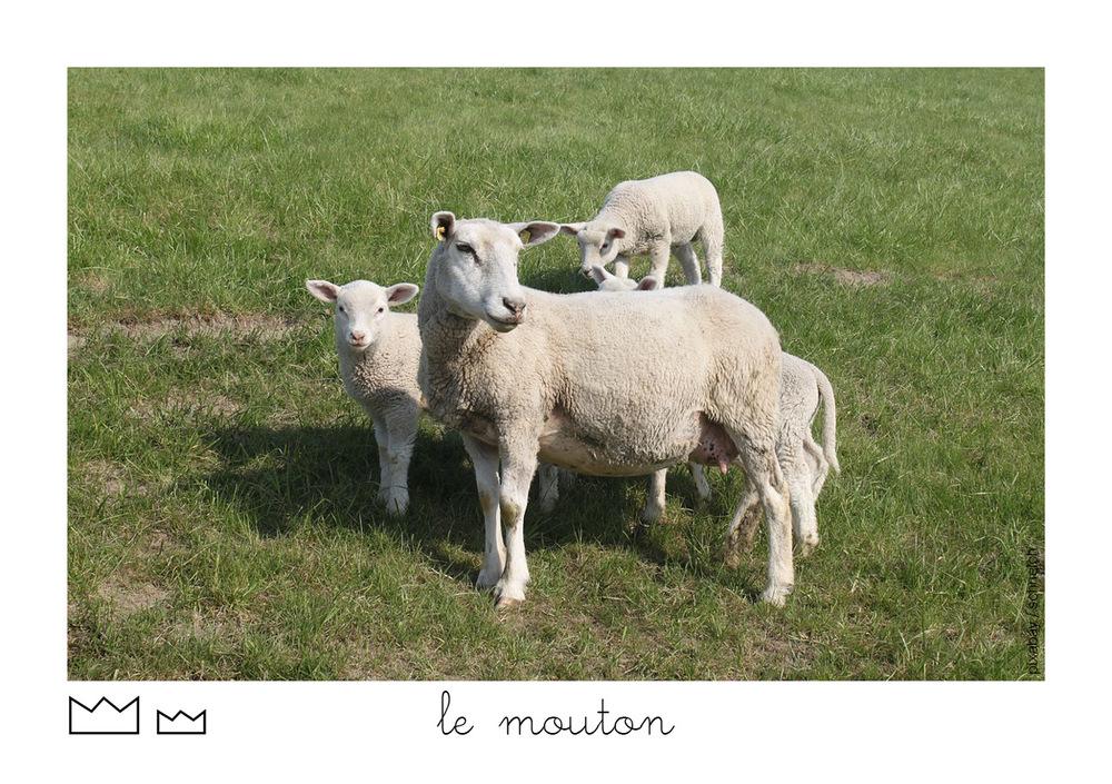 Macareux63.jpg