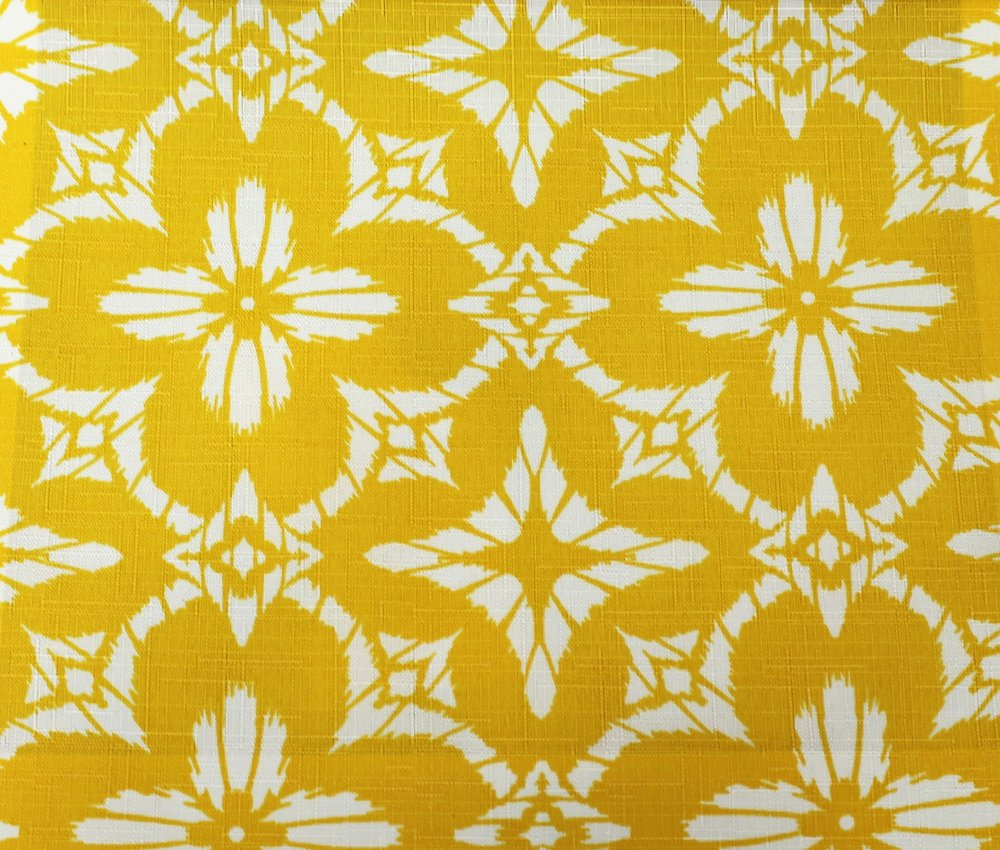 Yellow Aspidoras