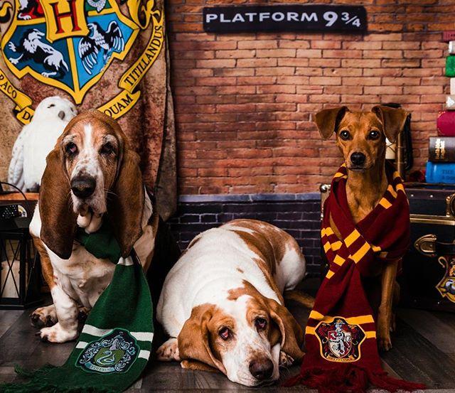 HAPPEE BIRTHDAE HARRY (and @jkrowlingoffical)! #harrypotter #happeebirthdaeharry #hogwartsexpress #slytherin #hufflepuff #gryffindor