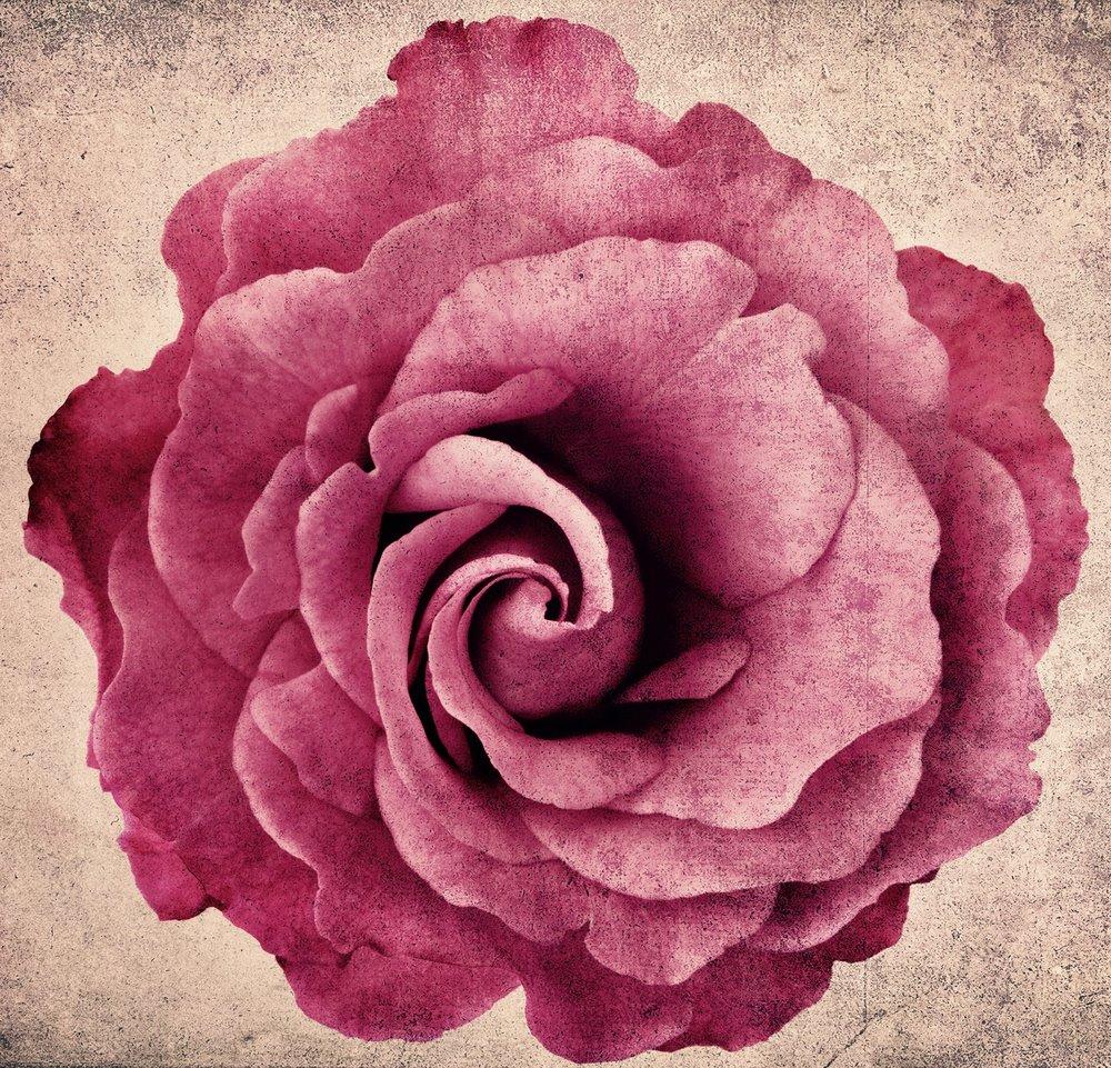 beautyflower.jpg