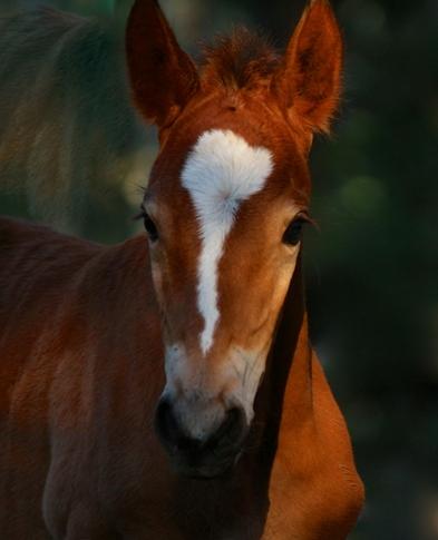 Hopi (Esperanza's filly born August 4, 2014)