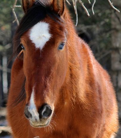 Ganuseda(wild horse orphaned at birth)