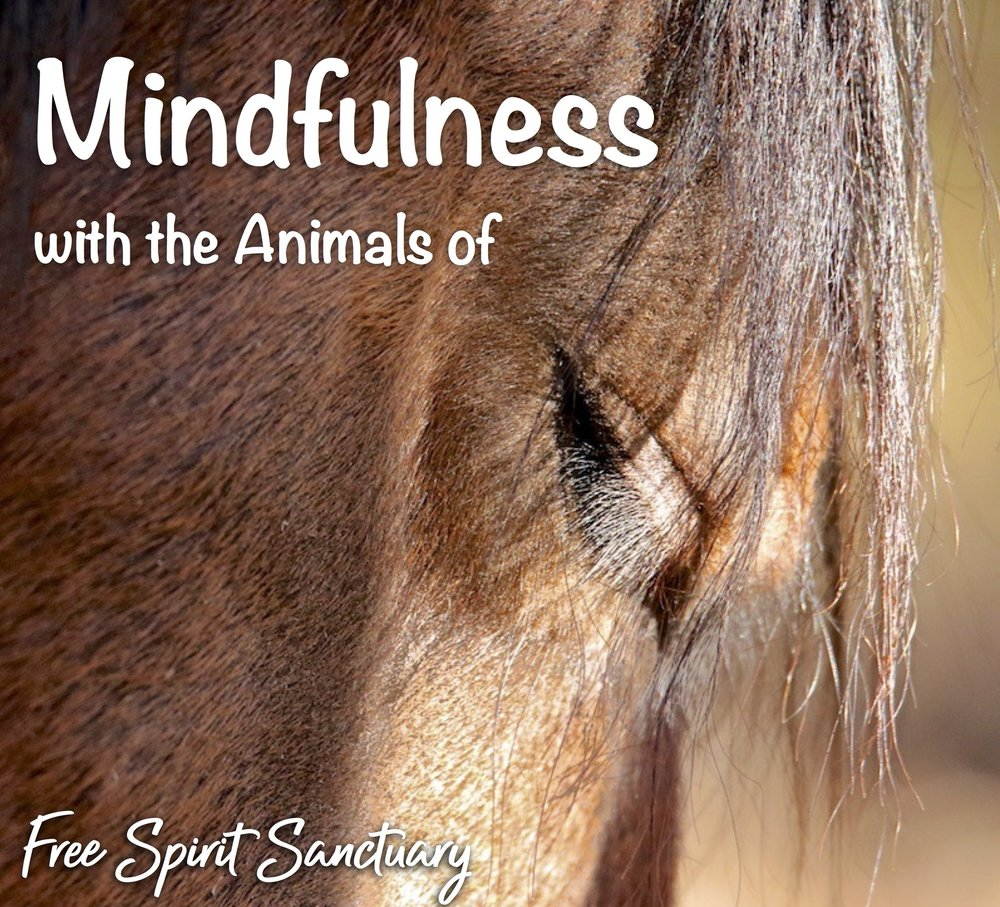 mindful animals sep 17 cr.jpg