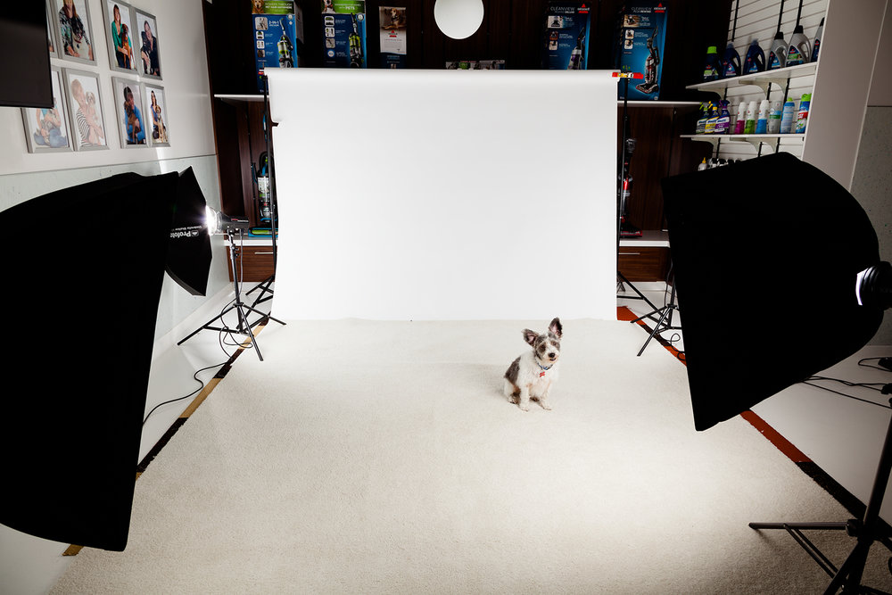 commercial_pet_photography.jpg
