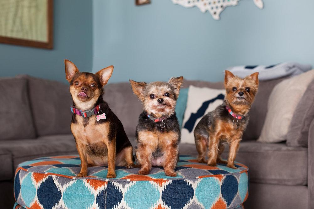 Buddies Pet Photography_MG_9624headswapb.jpg